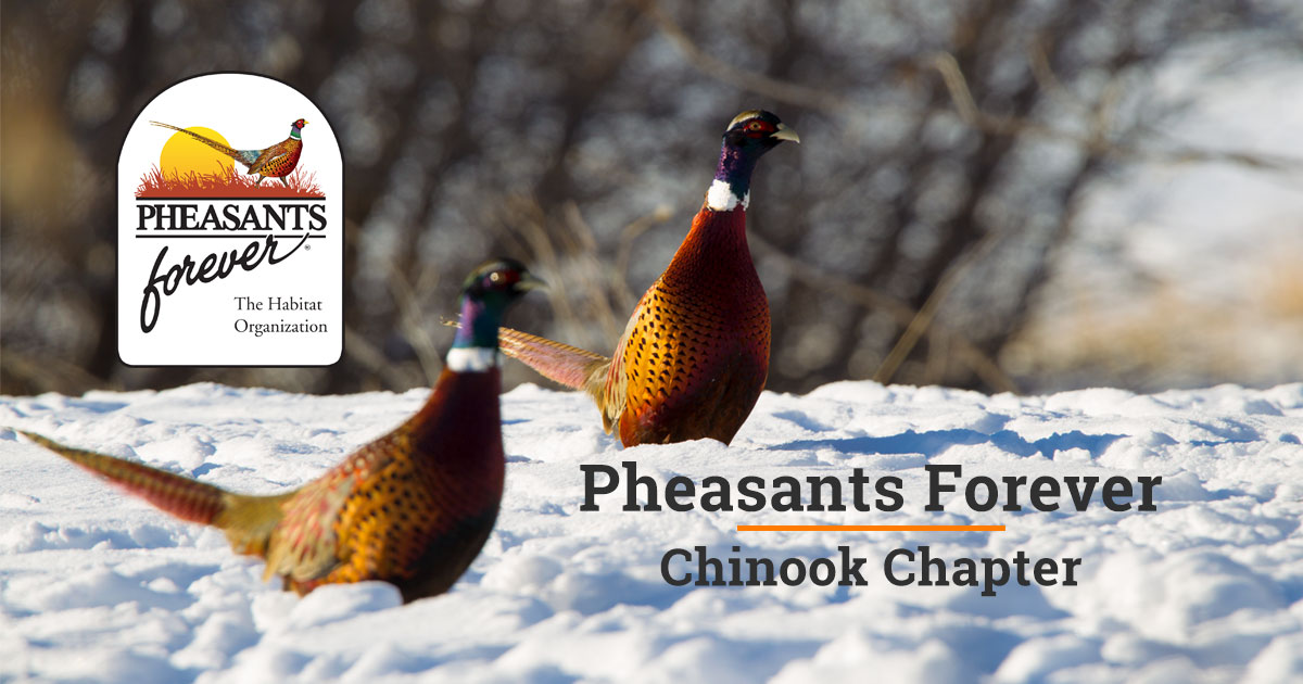 1aa2bdfd2 Pheasants Banquet Fundraising Event with Pheasants Forever Chinook