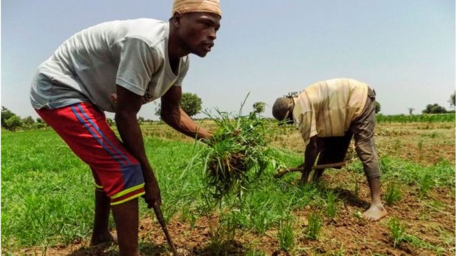 FG approves N13 Bln for pest control in 12 states