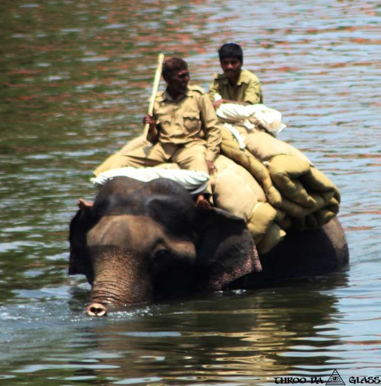Elephant Crossing,throodalookingglass,pravs,phenomenon,pheno-menon,elephant,water,crossing, dubare elephant camp
