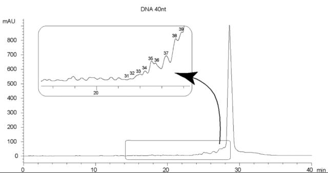 40nt DNA Oligo-RP 3µm Fingerprint