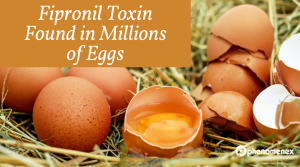 It's an Egg-tastrophe! Fear of Fipronil