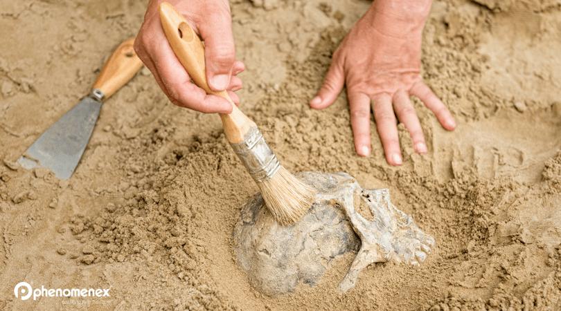Palaeoproteomics