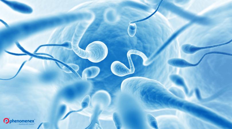 male infertility research