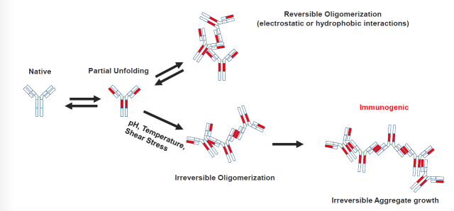 reversible oligomerization