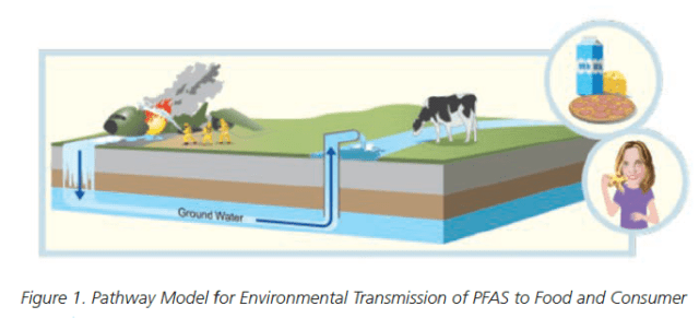 Pathway Model for Environmental Transmission of PFAS to Food and Consumer - PFAS in Food