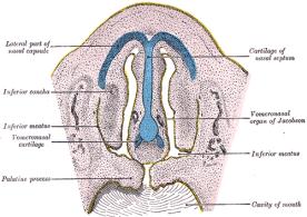 vno-diagram