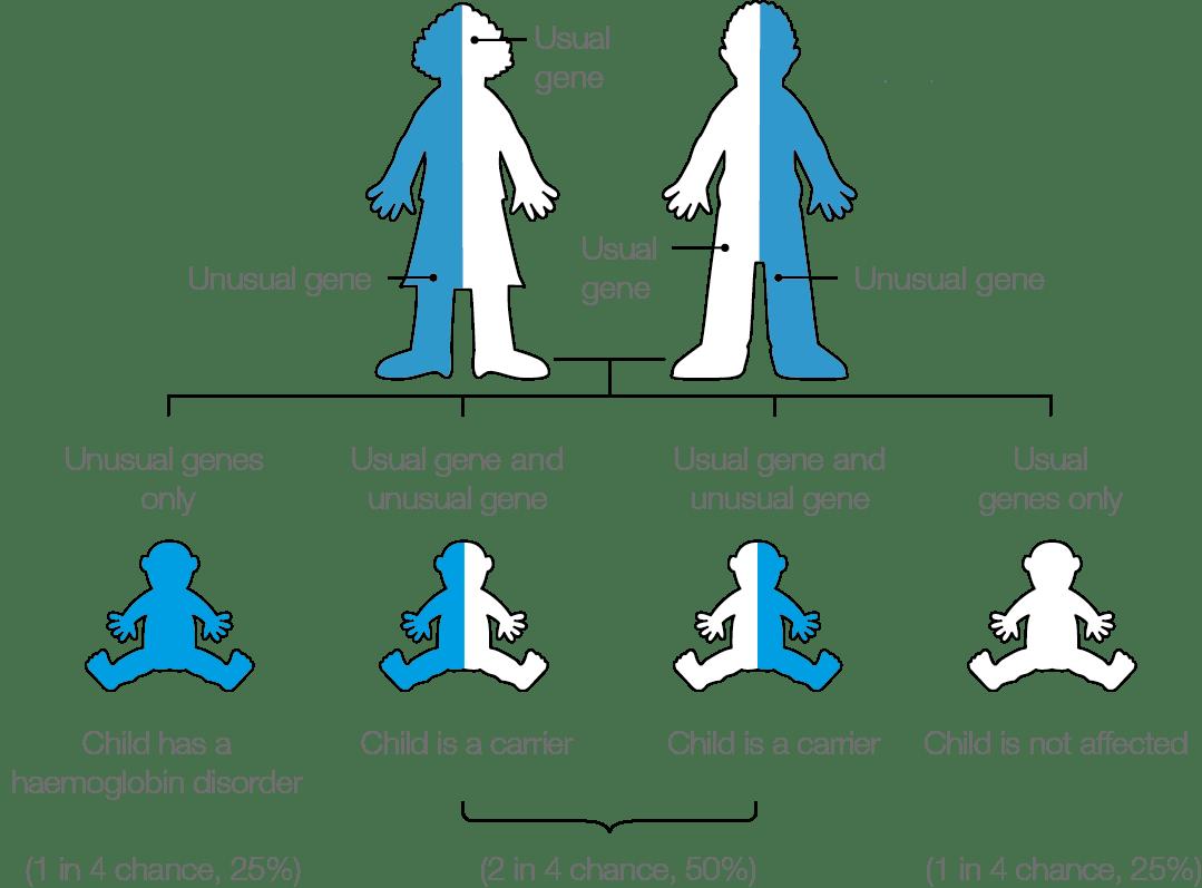 Updated Sickle Cell And Thalassaemia Screening Handbook