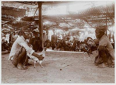 Sejarah Sabung Ayam Di Nusantara Bukan Sekedar Permainan Semata (1/4)