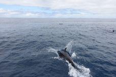 Delfine vor Daphne