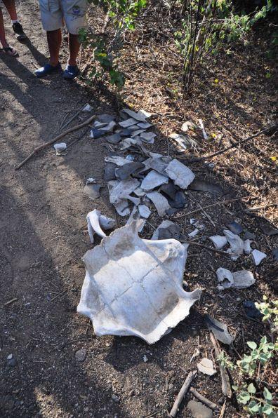 Überreste einer Riesenschildkröte