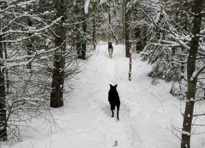 An unfamiliar trail…