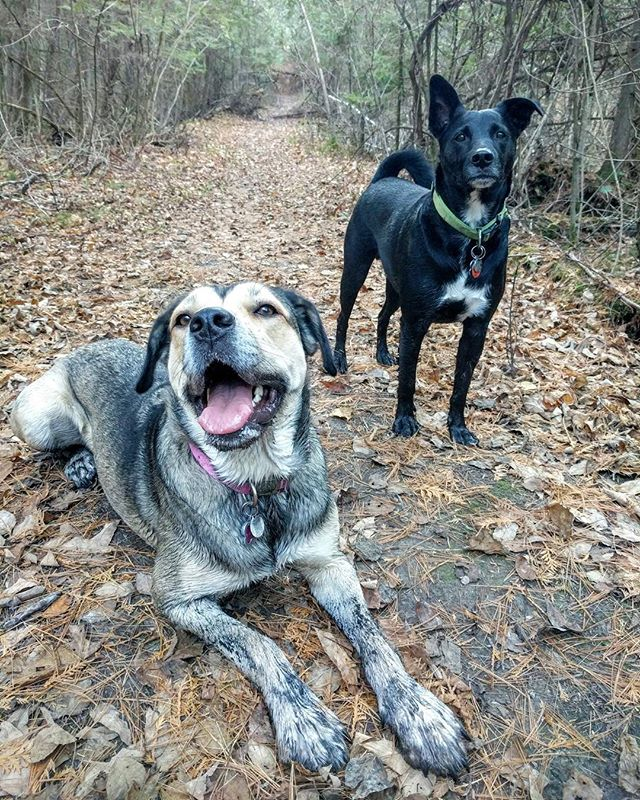 #tbt to dirtier daysLove seeing these two so happy!#abbieandrascal