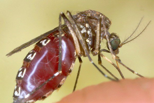 Rare, Deadly Virus Transmitted By Mosquitoes Detected In Three Pennsylvania Counties, State Officials Say