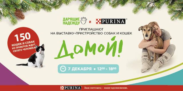 Возьми из приюта «Домой!»: PURINA и фонд «Дарящие надежду» организуют новогоднюю выставку-пристройство бездомных животных