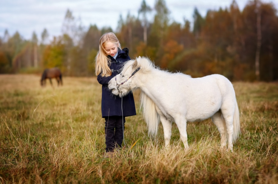 В Петербурге лошади, спасенные от уличного проката и бойни, работают терапевтами для детей