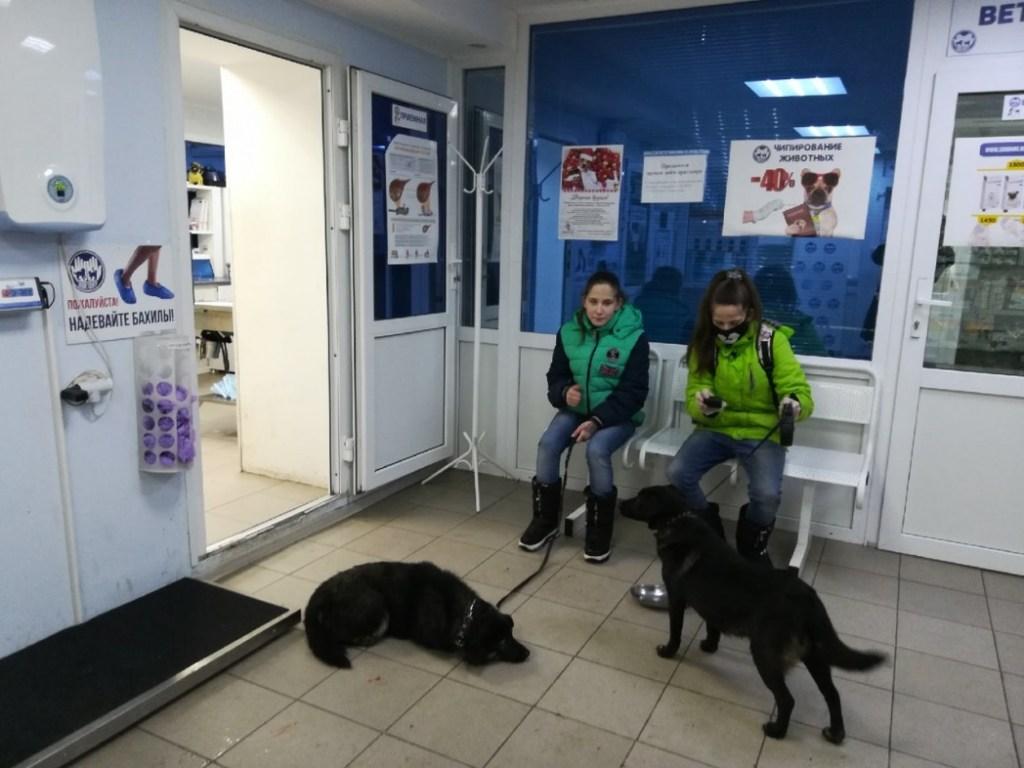 Любовь к животным привела в настоящую семью: сестры-сироты из Сургута, спасая собак, нашли маму
