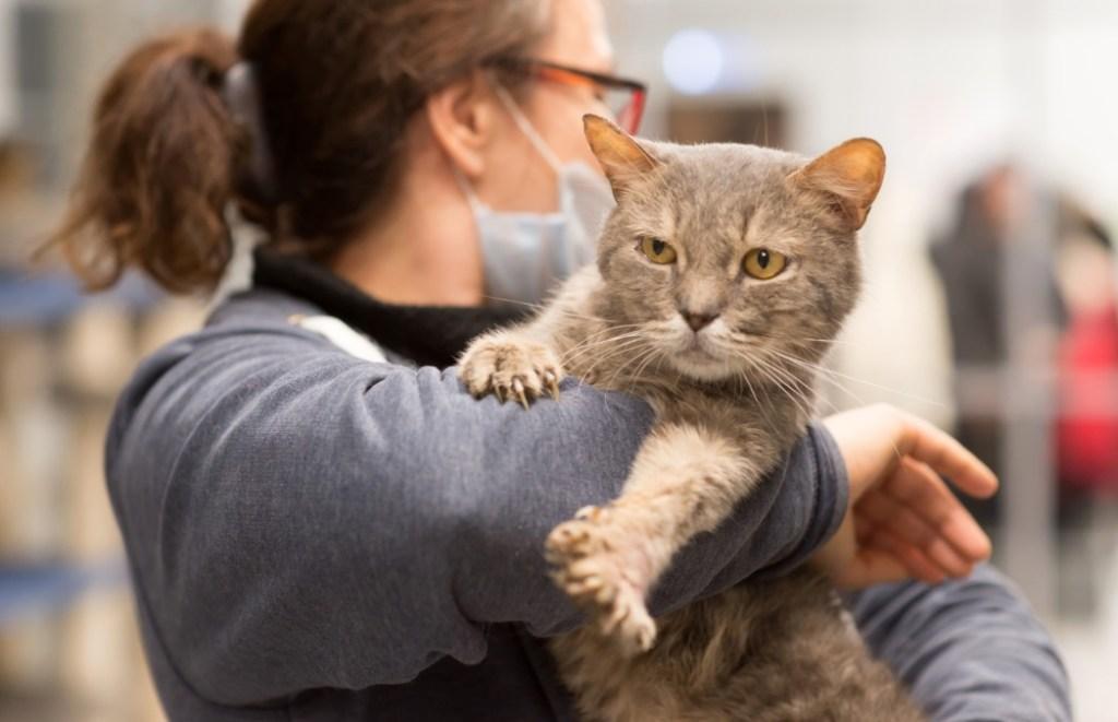 Приют для кошек «Преданное сердце» предлагает обнять кота