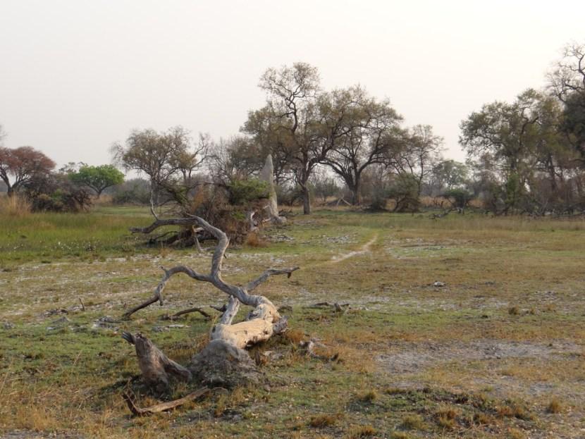 Okavango Delta landscape