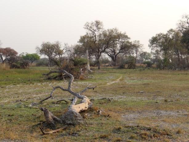 Okavango Delta landscape on walking safari Botswana