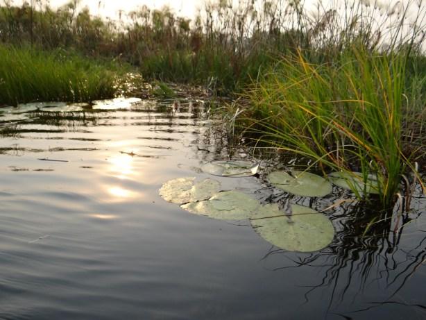 The waters of the Okavango Delta