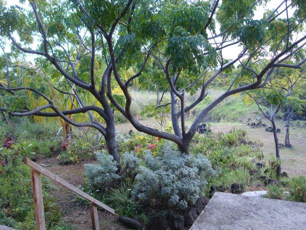 The garden view at Tekarera Inn