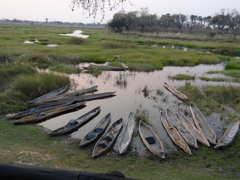 Oddballs' Camp Okavango Delta Botswana