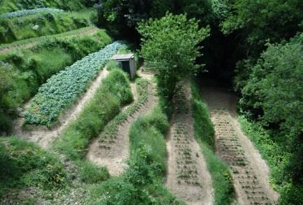 The terraced garden in Anacapri