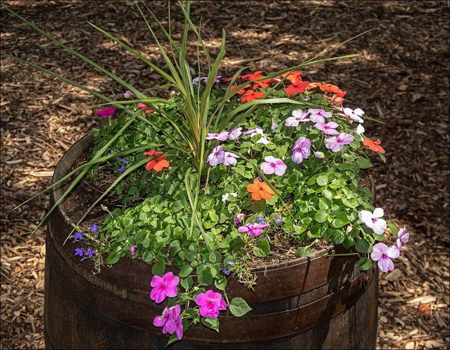 Pleasant Planting