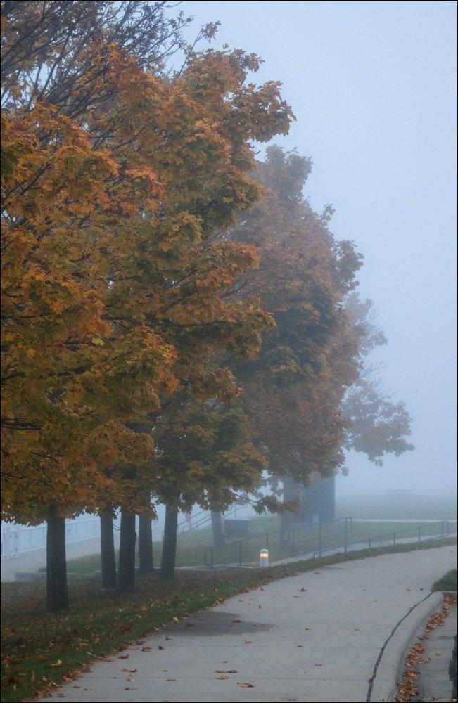 Foggy walkway