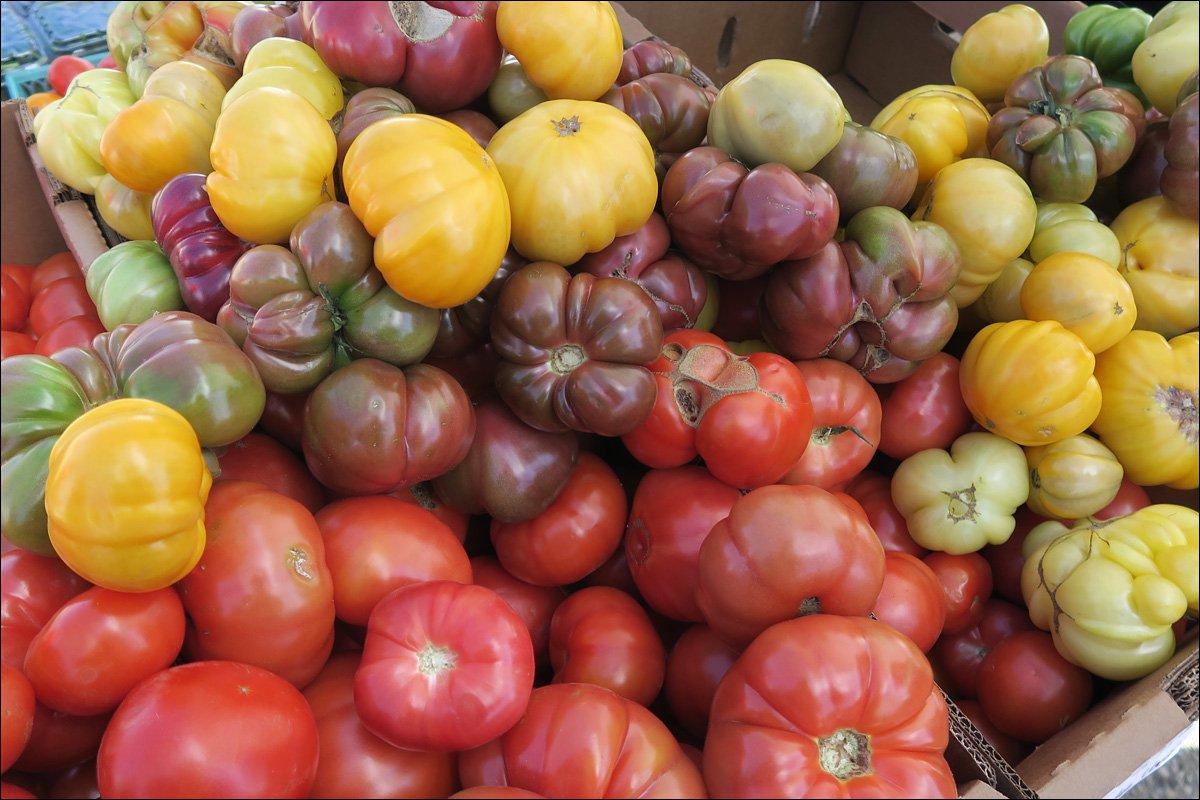 Madison Farmer's Market - Tomatoes
