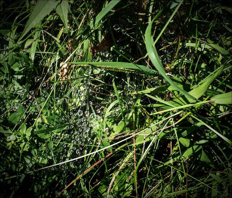 Dewy Droplets