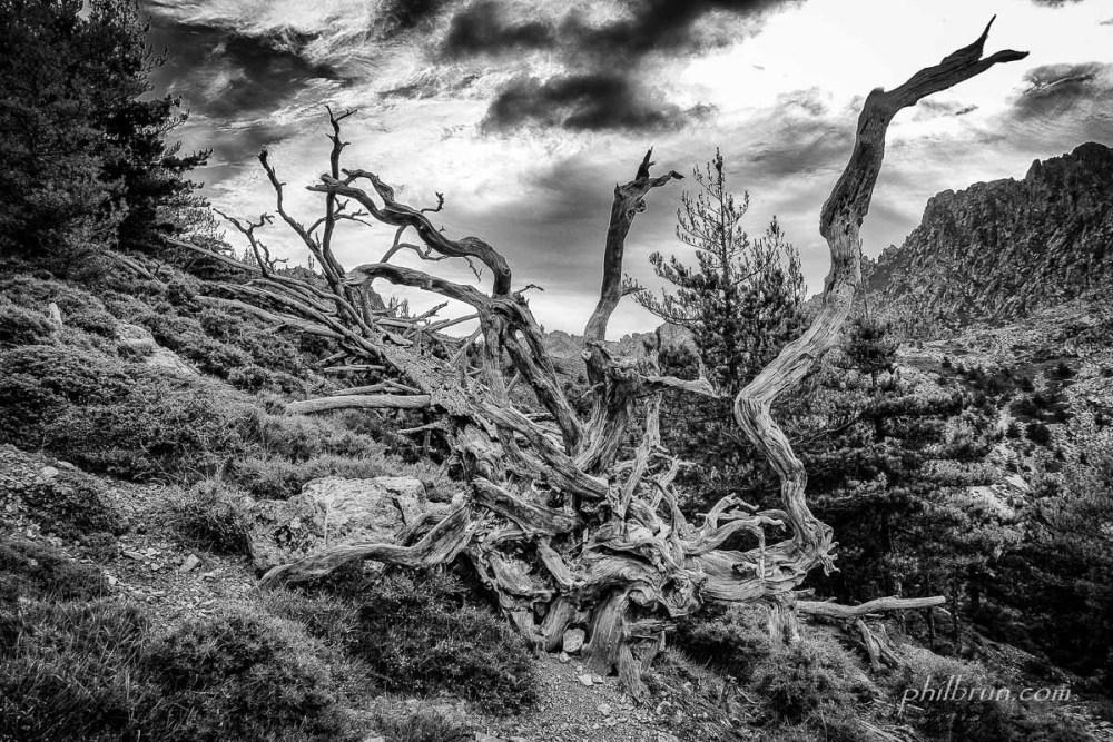 La Montagne Corse, la nature à l'état sauvage !