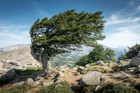 Un arbre travaillé par le vent