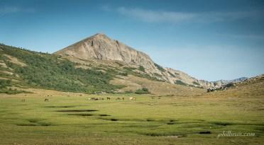 En arrivant sur le lac Nino, les chevaux sauvages nous accueillent sur les pozzines