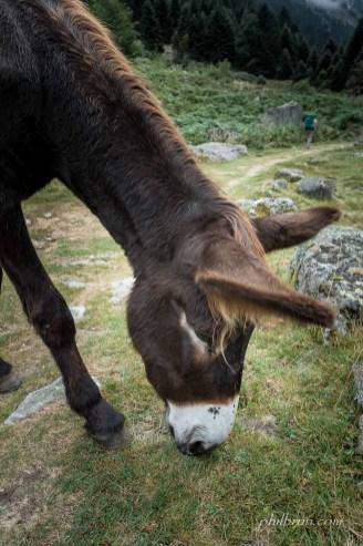 Un âne en travers du chemin...