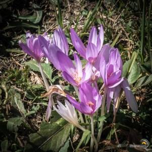 De jolies fleurs en grand nombre.