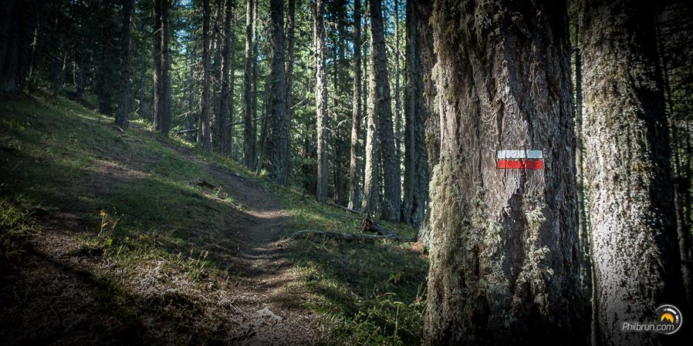 Le sentier du GR58 monte dans une forêt d'épineux