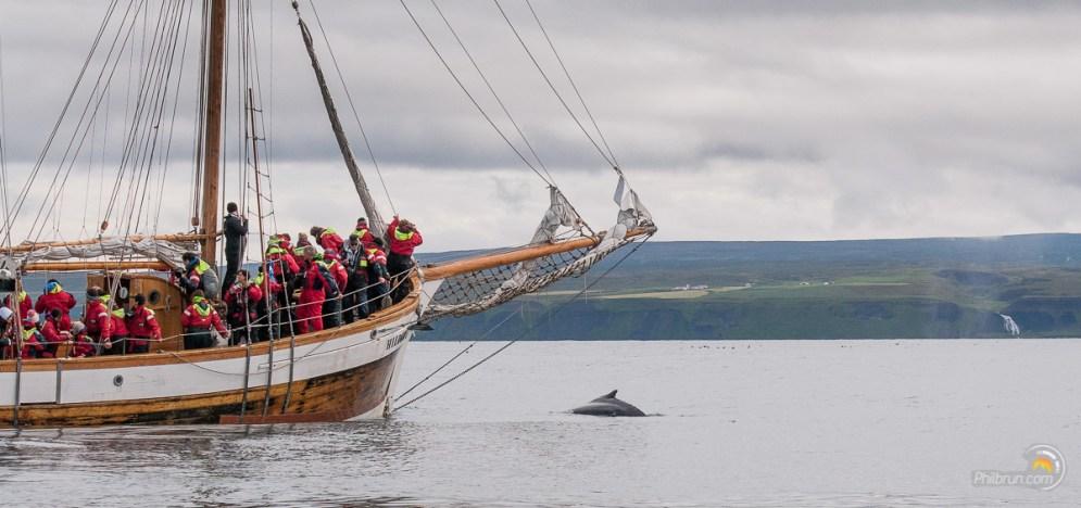 Les bateaux s'approchent sans difficulté. Les baleines semblent habituées.
