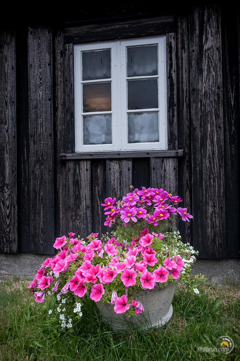Les fleurs contrastent avec la façade sombre du la maison