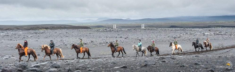 Un groupe de chevaux Islandais