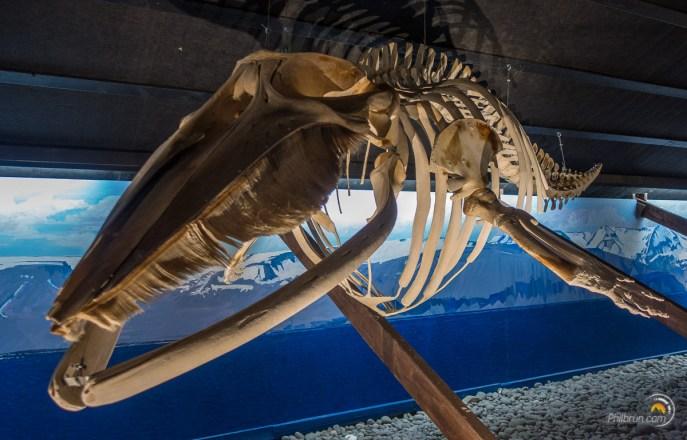 Musée de la baleine
