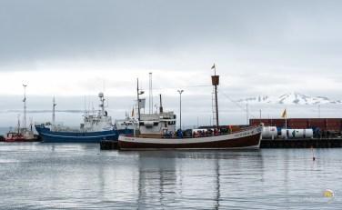 Les bateaux rentrent au port après la visite dans la zone des baleines.