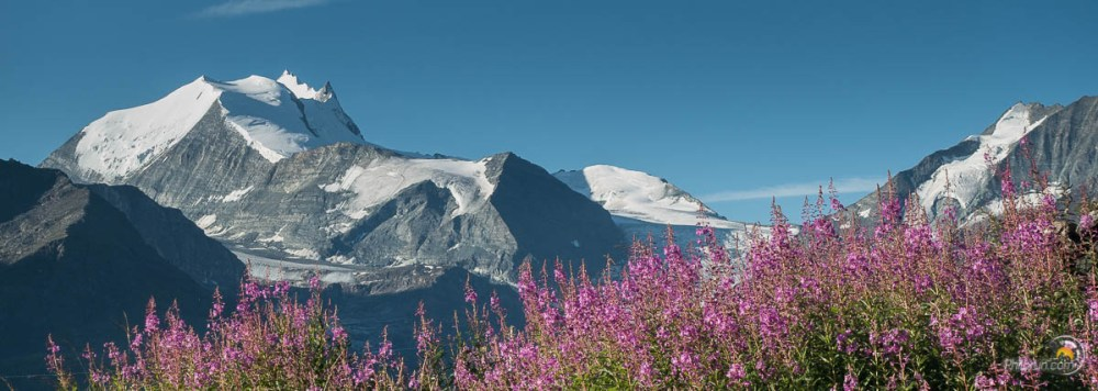 fleurs et montagnes