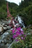 fleur-cascade