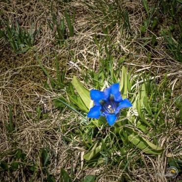 Jolie fleur bleue