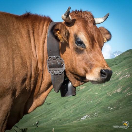 Une belle vache du Beaufortain et sa clarine