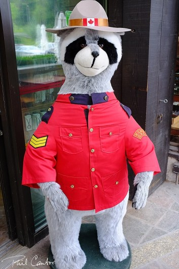 mounty-raccoon-canadian