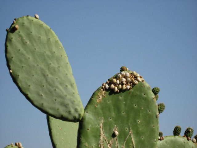 Cactus leaves against a blue sky