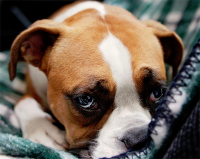 Back to school depression in dogs