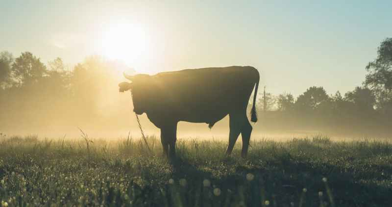 cow standing on grass field